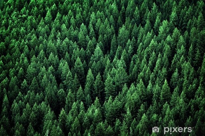 Vinyl Fotobehang Bos van pijnbomen in de bergen van de wildernis - Landschappen