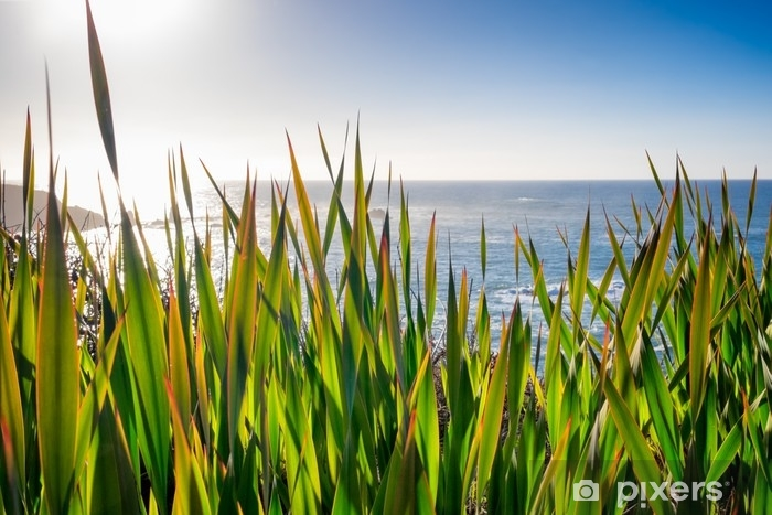 Pacific Ocean seascape viewed through wild iris plants growing in the foreground. Intentional sun flare. Washable Wall Mural - Landscapes