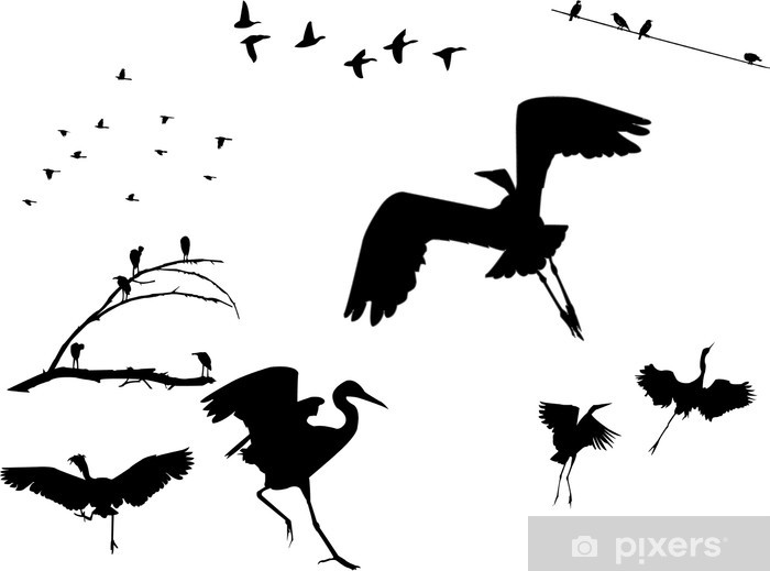 Papier peint vinyle Silhouettes oiseaux - Oiseaux