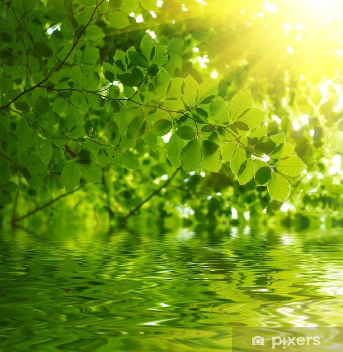 Fotomural Estándar Hojas verdes que reflejan en el agua - Temas