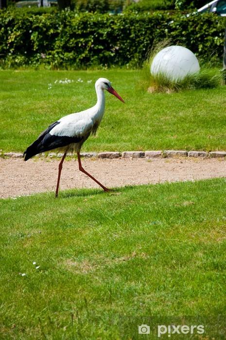 Vinyl Fotobehang Een ooievaar in het park - Vogels