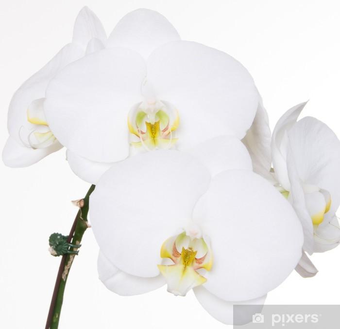 Sticker Pixerstick Orchidées blanches sur fond blanc - Fleurs