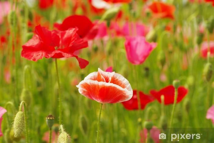 Naklejka Pixerstick Poppy - Kwiaty