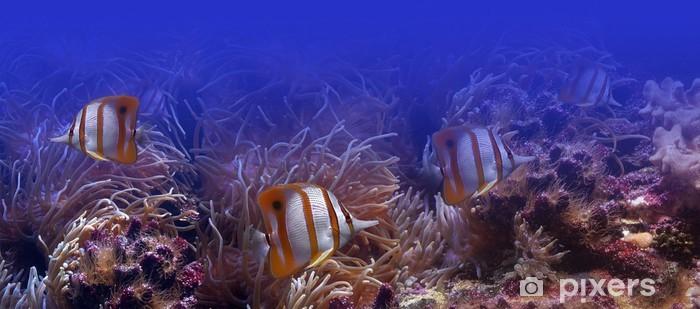 Fototapeta winylowa Tropikalne ryby - Tematy