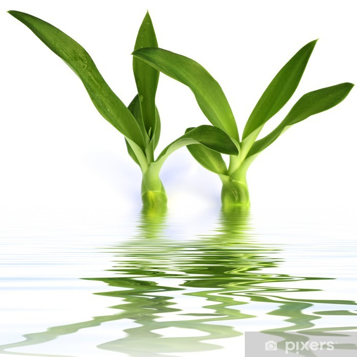 Plakat 2 żarówki aloes - Rośliny