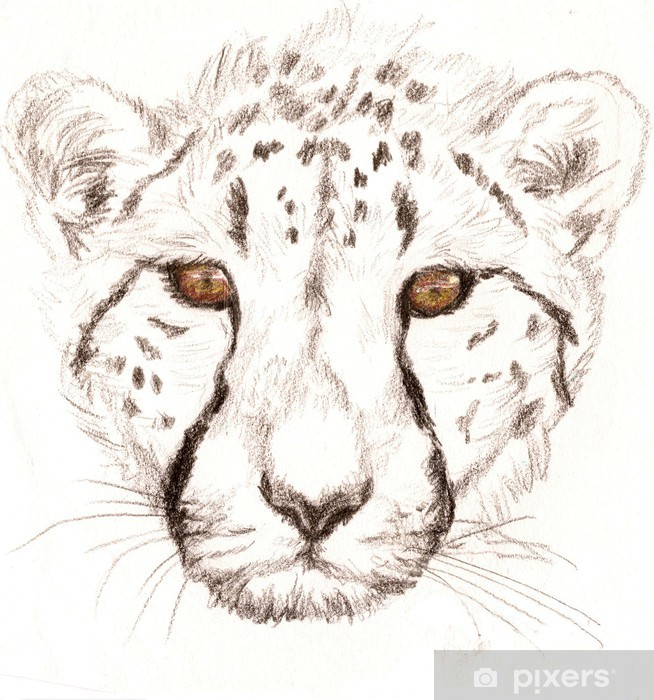 Fotomural Retrato a lápiz coloreado de un guepardo • Pixers ...