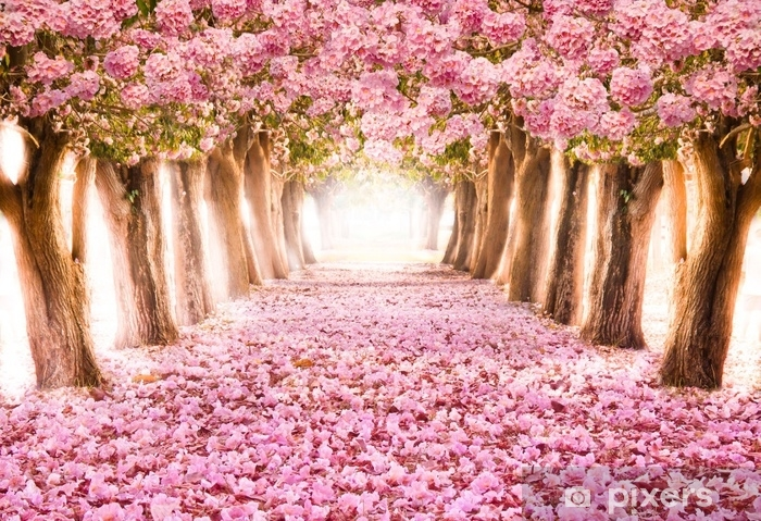 Falling Petal Over The Romantic Tunnel Of Pink Flower Trees