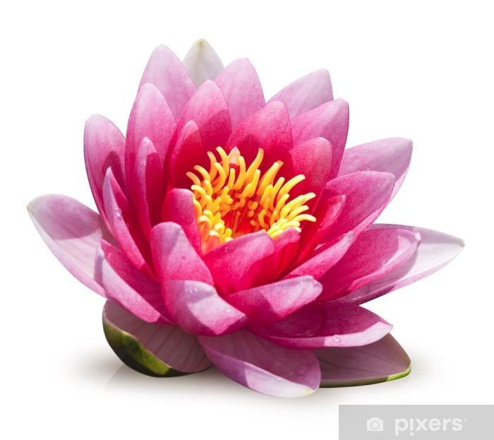 Fototapeta winylowa Kwiat lotosu na białym tle - Naklejki na ścianę