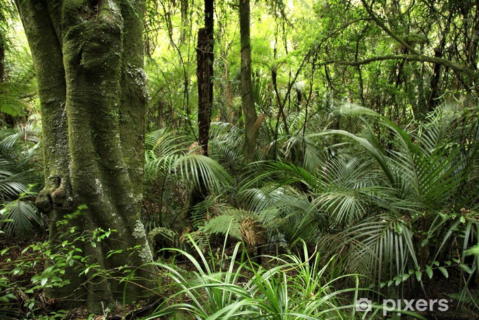 Fotomural Estándar Tropical forest - Temas