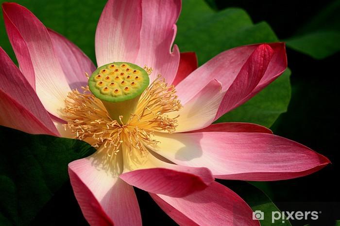 Papier peint vinyle Fiore 36 - Fleurs