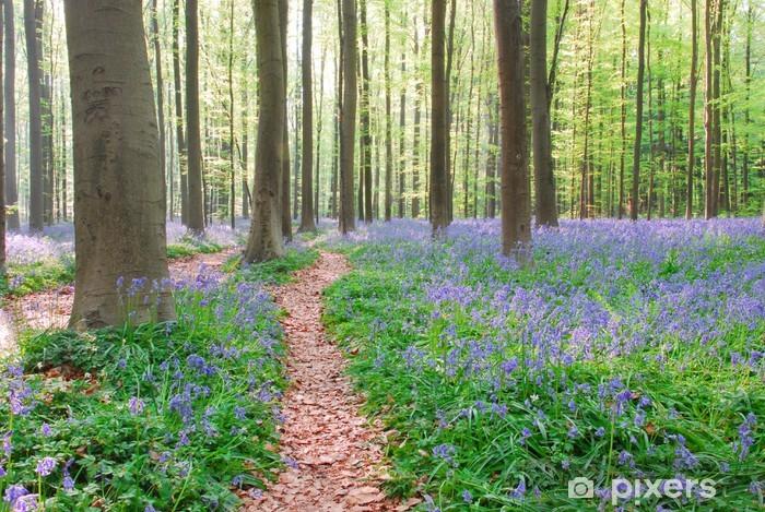 Papier Peint Autocollant Jacinthe des bois jacinthe dans Hallerbos belgique - Arbres