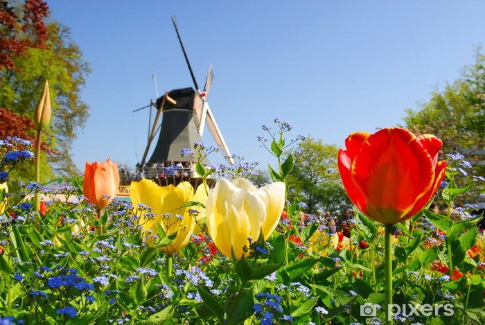 typical dutch: mill and tulips in keukenhof holland Vinyl Wall Mural - European Cities