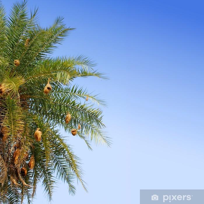 Papier peint vinyle Nids d'oiseaux dans un palmier - Oiseaux
