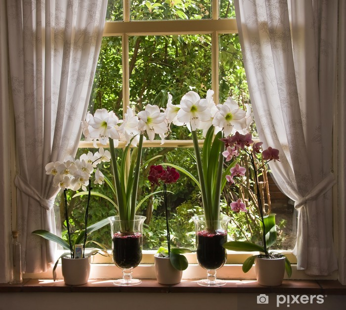 Fototapeta winylowa Dużo kwiatów w starym oknie - iStaging
