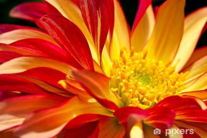 Sticker Coeur D Une Fleur Jaune Rouge Dahlia Comme Plan Rapproche