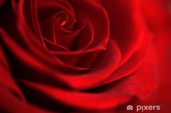 Papier Peint Fleur Rose Rouge Symbolisant L Amour Pixers Nous