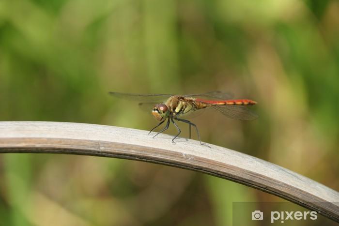 Fototapeta winylowa Dragonfly7 - Pory roku