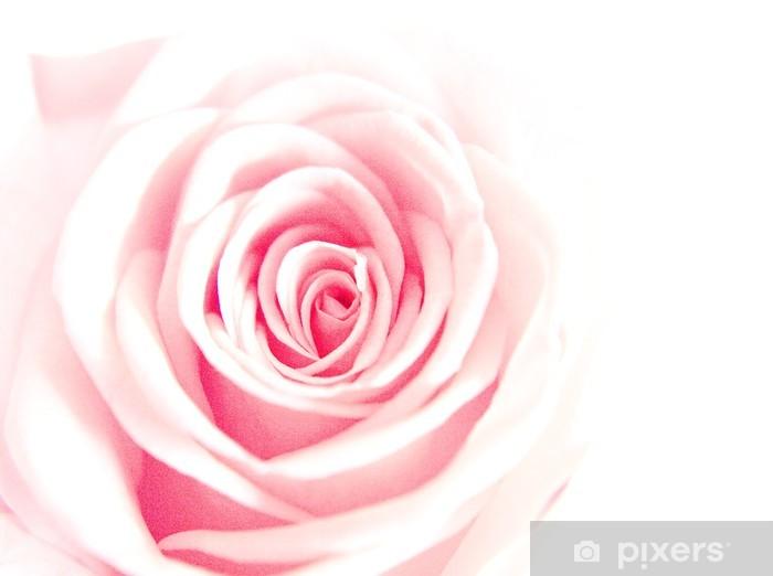 light pink rose Vinyl Wall Mural - Happiness