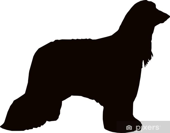 50903d61f40 Fototapeta Afghánský chrt pes • Pixers® • Žijeme pro změnu