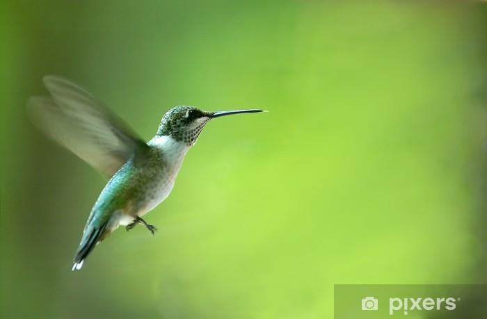 Vinilo Pixerstick Hummingbird - Aves