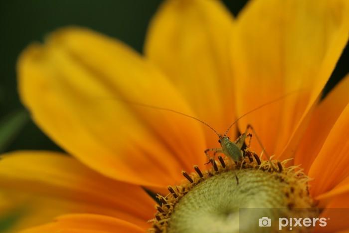 Fototapeta winylowa Insecte sur rudbeckia - Ekologia