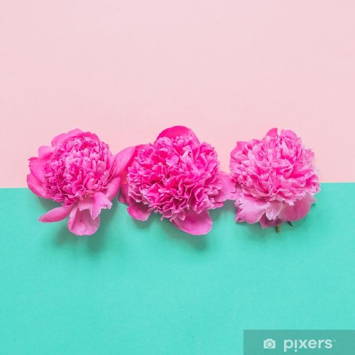 Pixerstick Aufkleber Drei Knospen von Pfingstrosen auf rosa und türkisfarbenen Hintergrund. Mode minimales Schönheitskonzept - Pflanzen und Blumen