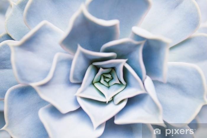 Pixerstick-klistremerke Sukkulent blomstermønster nærbilde - Planter og Blomster