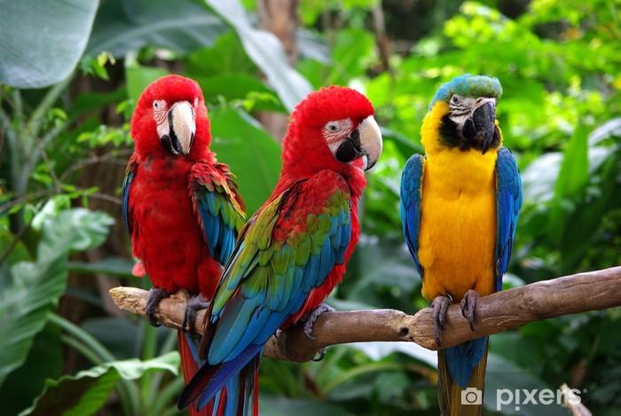 Naklejka Pixerstick Papugi w Azji Południowo-Wschodniej - Tematy