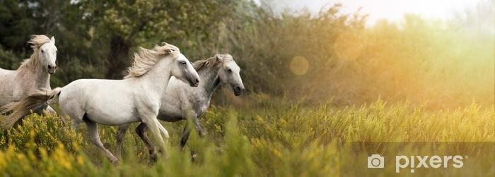 Fototapeta samoprzylepna Piękne białe konie biegnące w terenie - Zwierzęta
