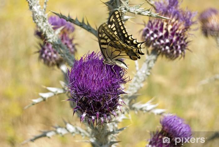 Nálepka Pixerstick Madama butterfly - Květiny