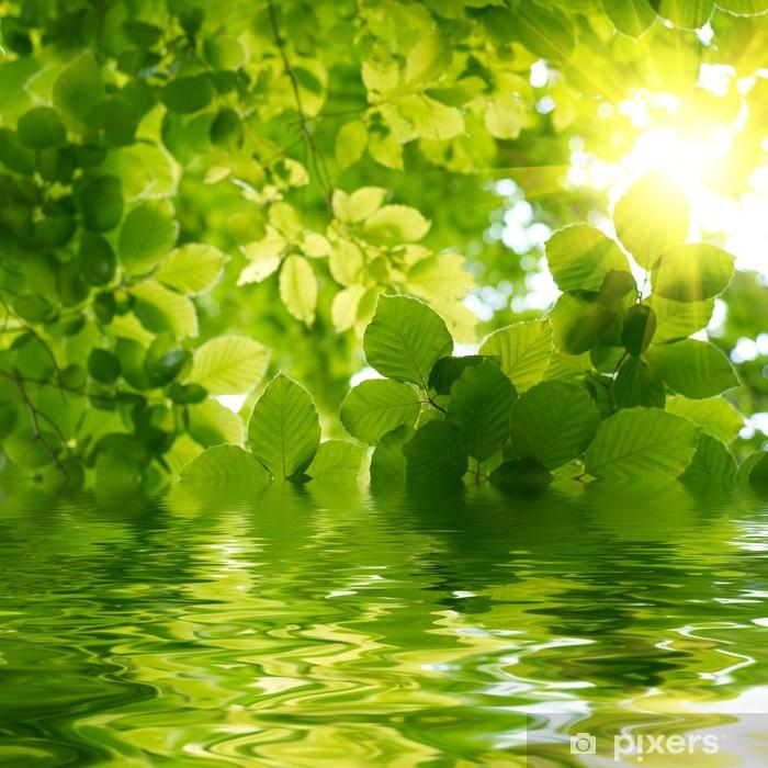Fototapeta zmywalna Zielone liście z promień Słońca. - Tematy