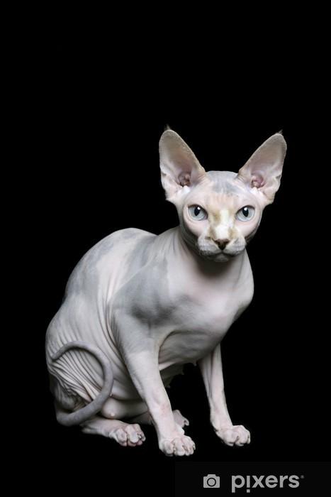 Sphynx cat Sticker - Pixerstick