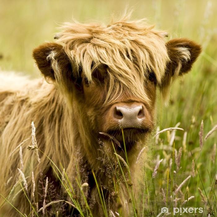 Highland cow Self-Adhesive Wall Mural - Mammals