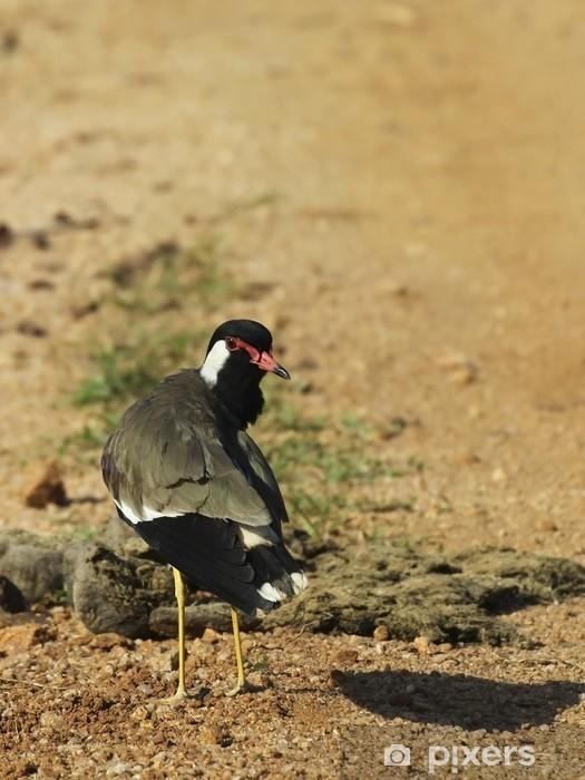 Carta da Parati in Vinile Red Wattled Pavoncella - Uccelli