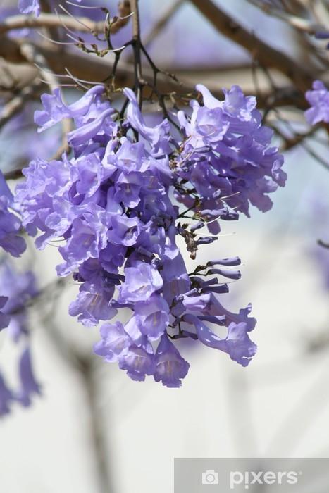 Purple Flower On Jacaranda Tree Wall Mural Pixers We Live To Change