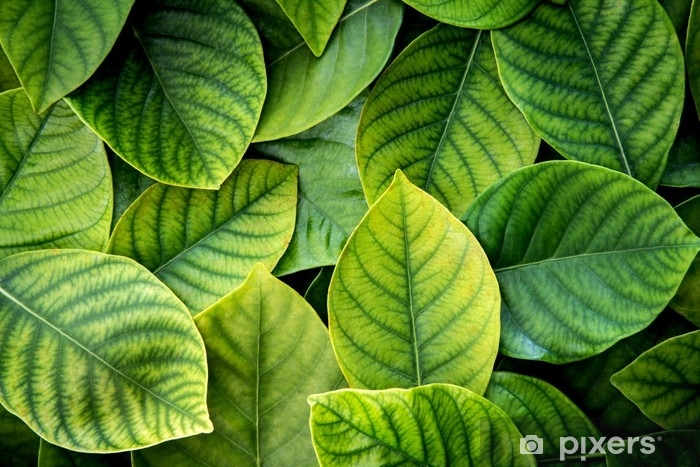 The Fresh Tropical Green Leaves Background Wall Mural Pixers We Live To Change Find the perfect tropical green leaf stock illustrations from getty images. the fresh tropical green leaves background wall mural pixers we live to change