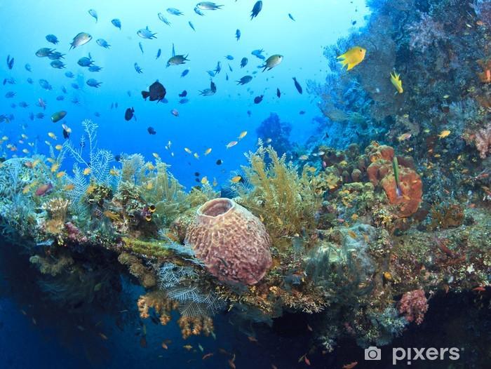 Fotomural Autoadhesivo Pecio submarino de la Libertad - Arrecife de coral