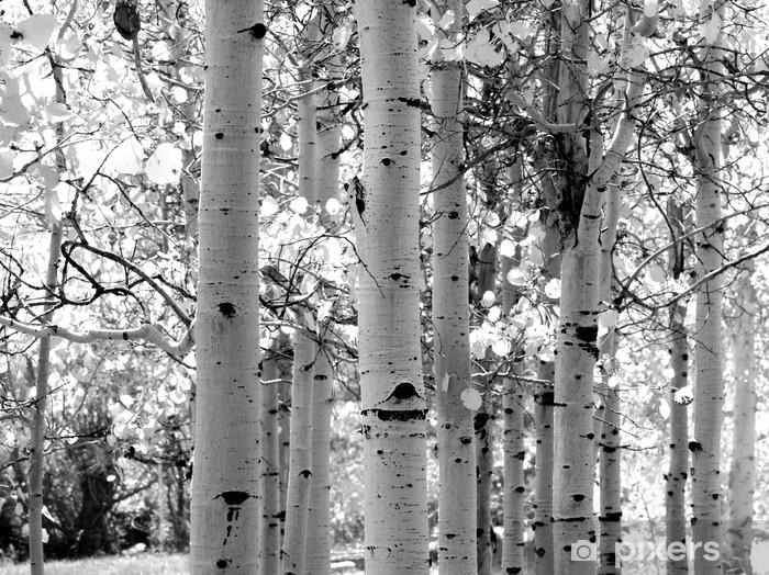 black and white image of aspen trees Vinyl Wall Mural - Styles