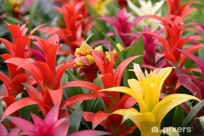 guzmania Pixerstick Sticker - Plants