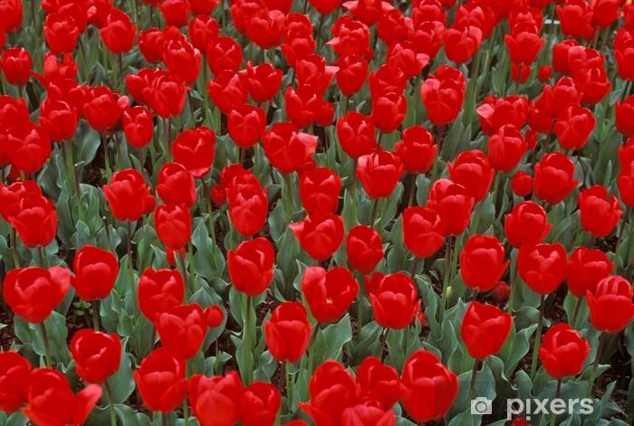 Naklejka Pixerstick Czerwone tulipany - Tematy