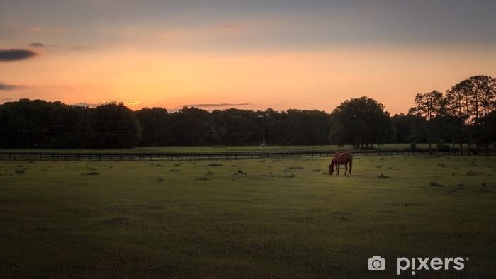 Afwasbaar Fotobehang Paard in een groen gebied dat bij zonsondergang voedt - Dieren