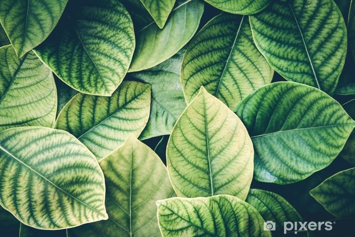 The Fresh Tropical Green Leaves Background Retro Vintage Colortone Wall Mural Pixers We Live To Change Simply peel and stick the watercolor wallpaper to your walls then sit back and enjoy. the fresh tropical green leaves background retro vintage colortone wall mural pixers we live to change