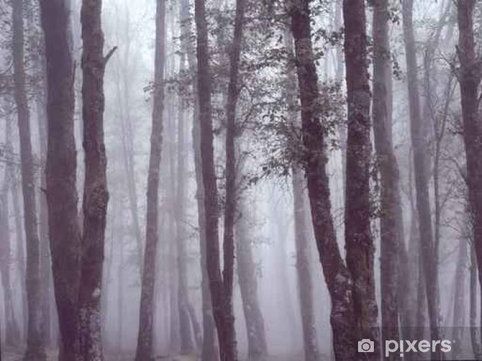 Vinyl Fotobehang Mistige bossen met mooi licht - Landscapes