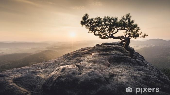 Zelfklevend Fotobehang Sächsische schweiz - alte kiefer zum sonnenaufgang - Landschappen