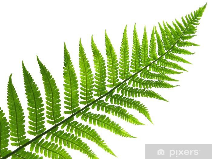 Nálepka Pixerstick List kapradiny - Rostliny