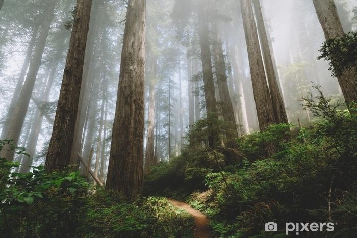 Sticker Pixerstick Californie du Nord - séquoias - Paysages