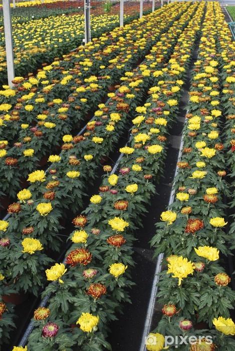 Vinyl-Fototapete Große Blume Chrysantheme - Leben