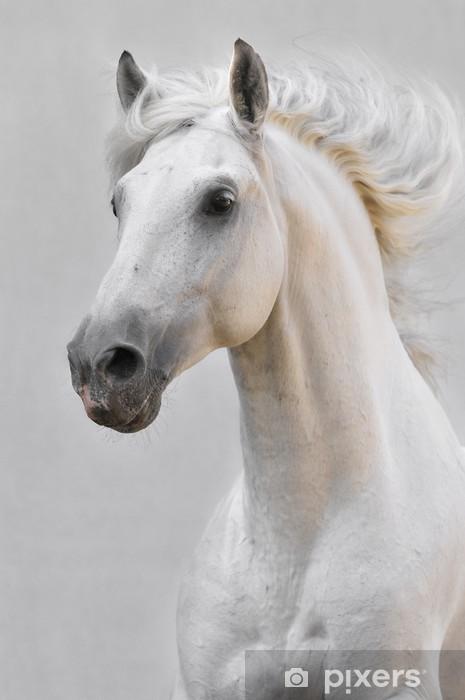 Sticker Pixerstick Cheval blanc étalon isolé sur le fond gris - Thèmes