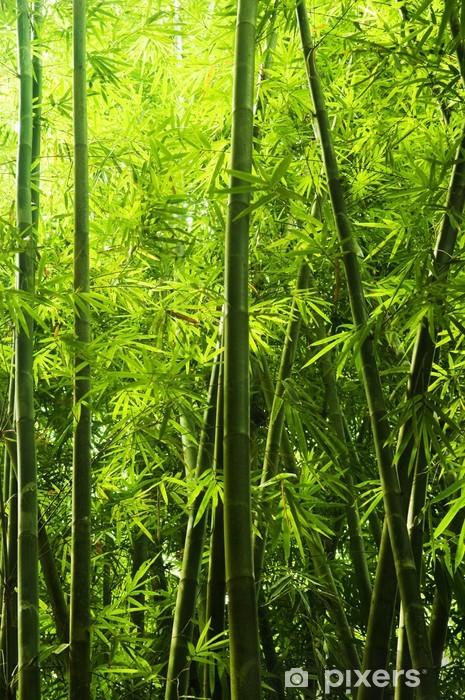 Vinilo Pixerstick Bamboo forest -