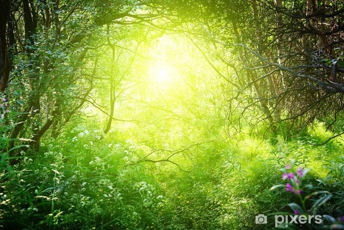 Fotomural Estándar Día soleado en el bosque profundo - Temas